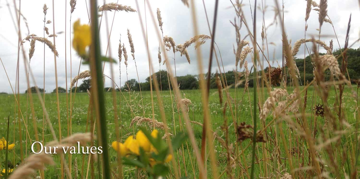 Grasses and wildflowers on our farm in Devon